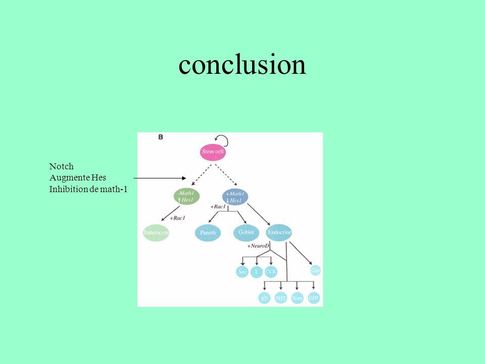 conclusion Notch Augmente Hes Inhibition de math-1