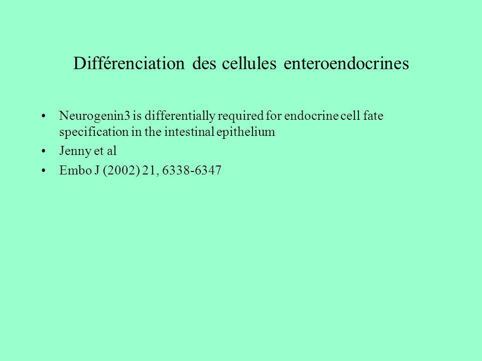 Différenciation des cellules enteroendocrines