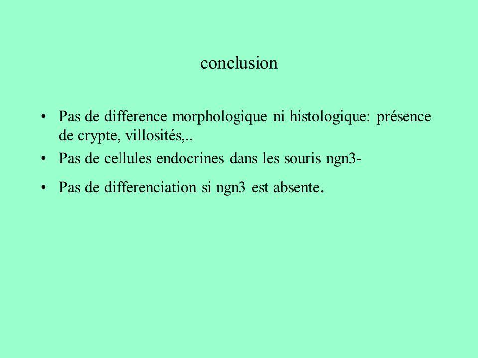 conclusion Pas de difference morphologique ni histologique: présence de crypte, villosités,.. Pas de cellules endocrines dans les souris ngn3-