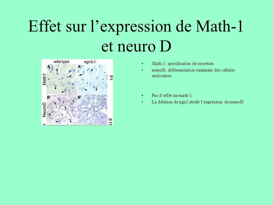Effet sur l'expression de Math-1 et neuro D