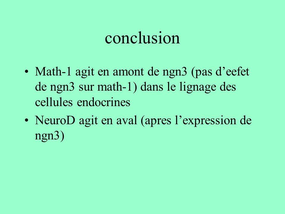 conclusion Math-1 agit en amont de ngn3 (pas d'eefet de ngn3 sur math-1) dans le lignage des cellules endocrines.