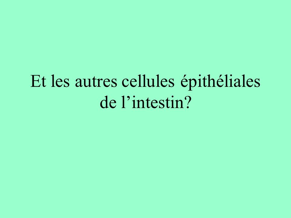 Et les autres cellules épithéliales de l'intestin