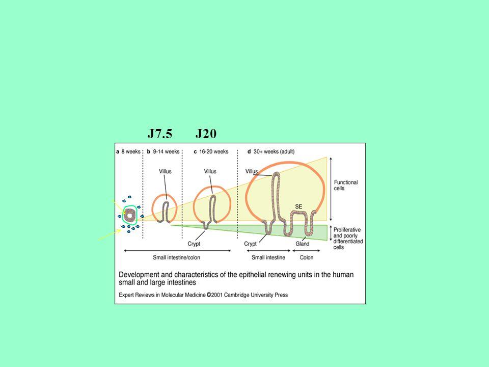 J7.5 J20