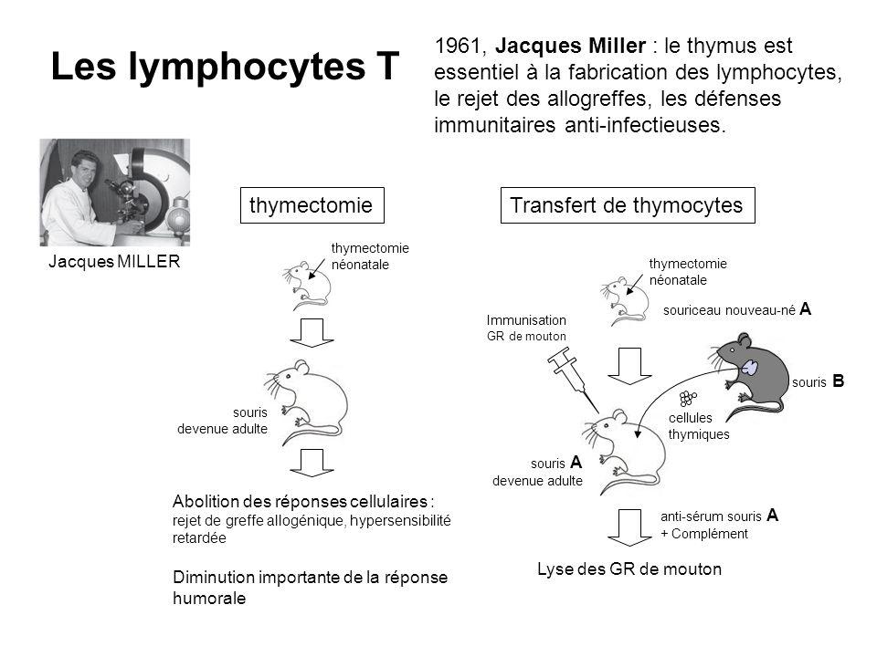 1961, Jacques Miller : le thymus est essentiel à la fabrication des lymphocytes, le rejet des allogreffes, les défenses immunitaires anti-infectieuses.