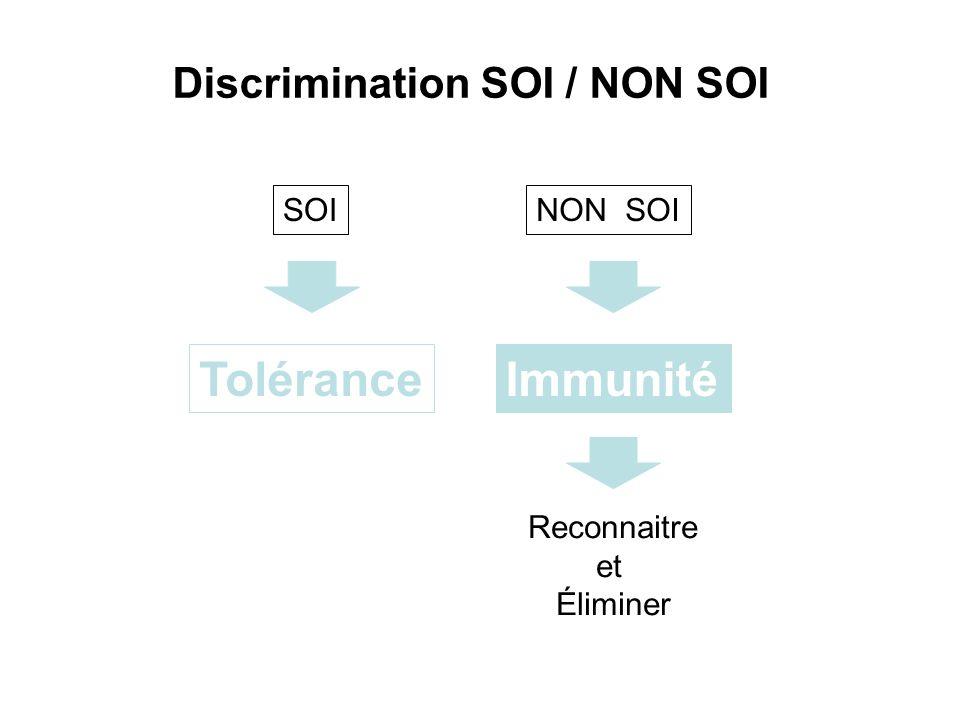 Tolérance Immunité Discrimination SOI / NON SOI SOI NON SOI