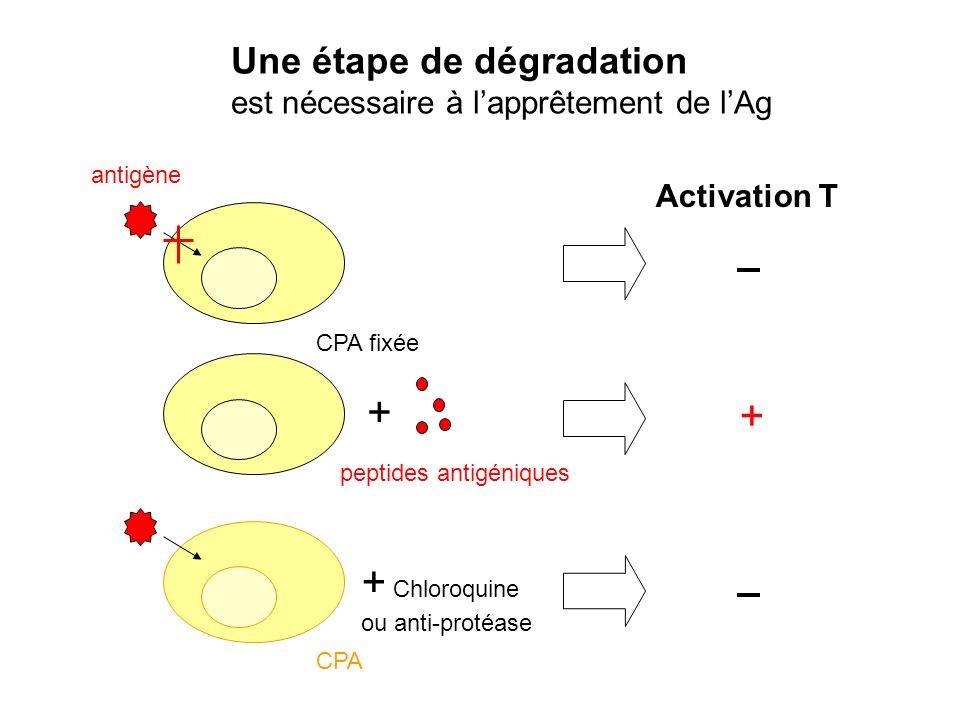 + + + Chloroquine Une étape de dégradation