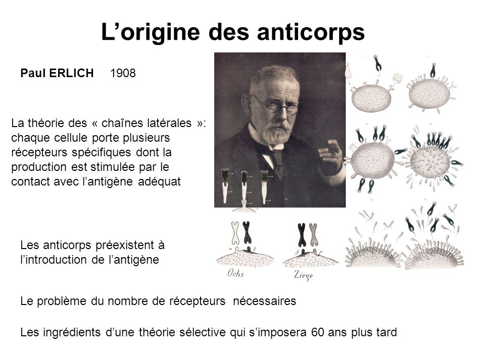 L'origine des anticorps