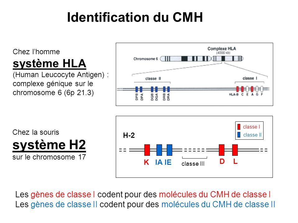 Identification du CMH système H2 système HLA