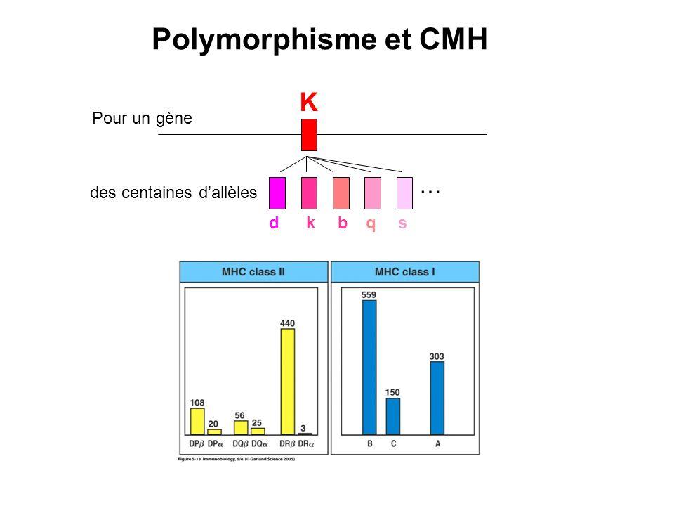 Polymorphisme et CMH K … Pour un gène des centaines d'allèles d k b q