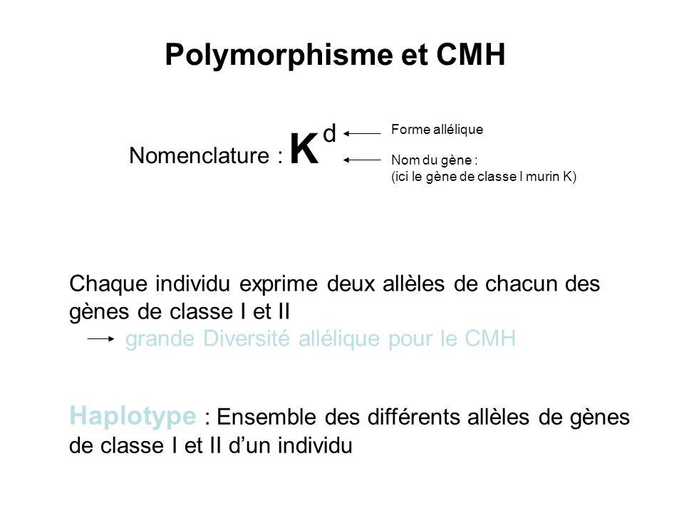 Polymorphisme et CMH Nomenclature : K d. Forme allélique. Nom du gène : (ici le gène de classe I murin K)