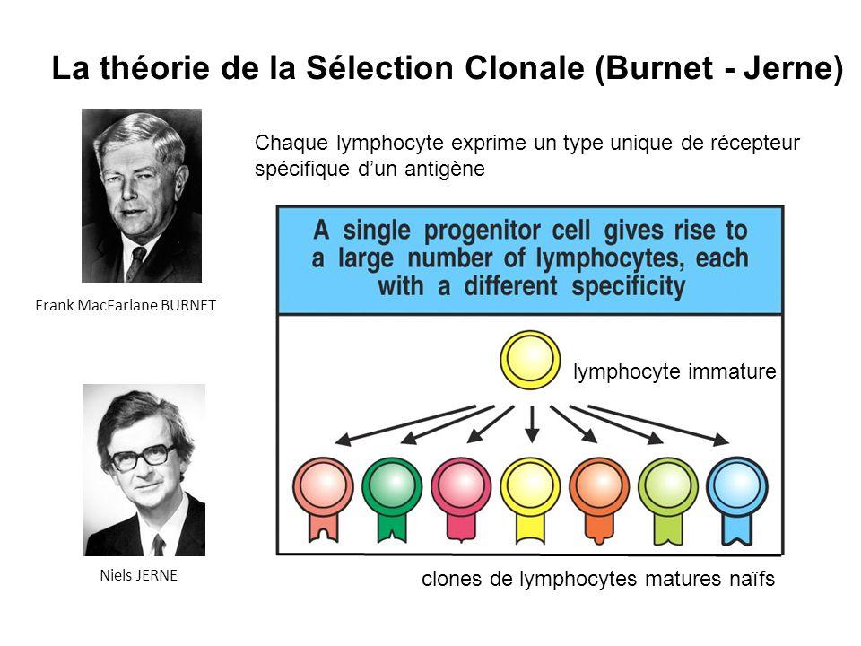 La théorie de la Sélection Clonale (Burnet - Jerne)