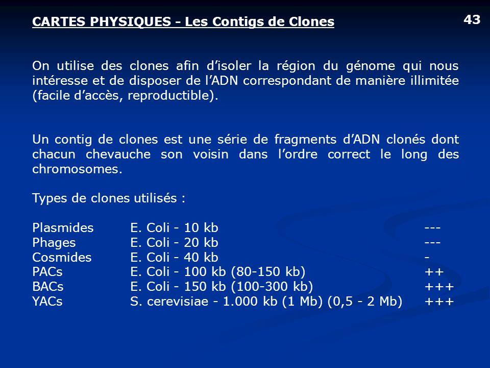CARTES PHYSIQUES - Les Contigs de Clones