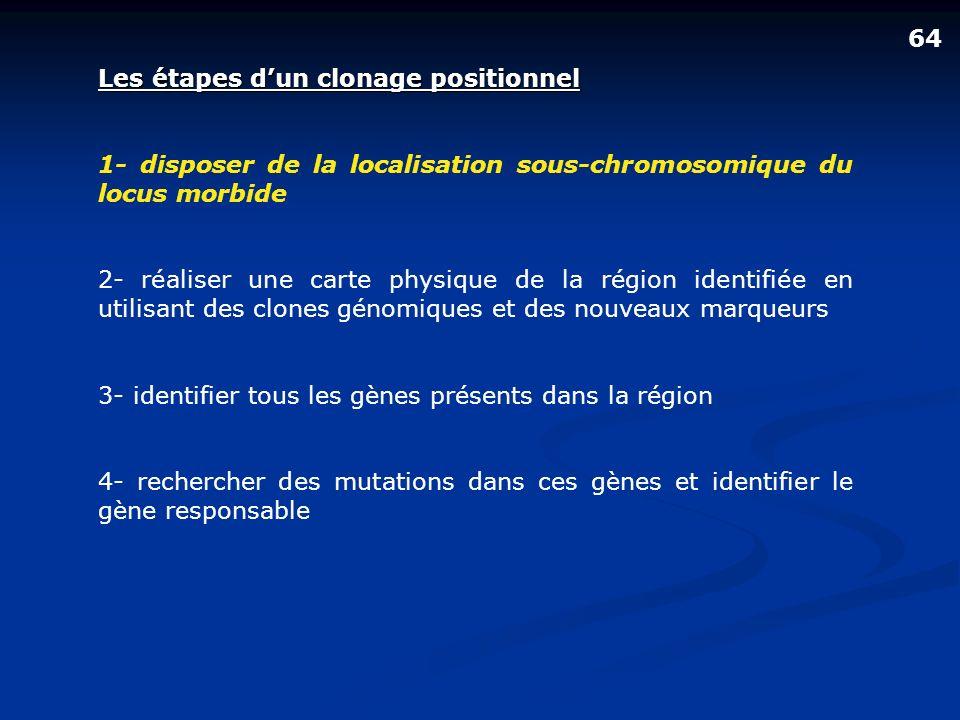 64 Les étapes d'un clonage positionnel. 1- disposer de la localisation sous-chromosomique du locus morbide.