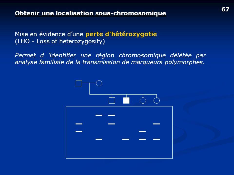 67Obtenir une localisation sous-chromosomique. Mise en évidence d'une perte d'hétérozygotie. (LHO - Loss of heterozygosity)