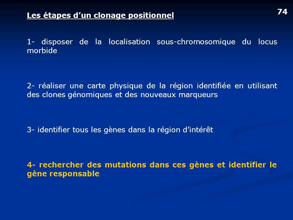 74 Les étapes d'un clonage positionnel. 1- disposer de la localisation sous-chromosomique du locus morbide.