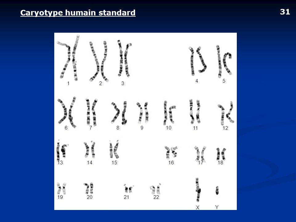 Caryotype humain standard 31