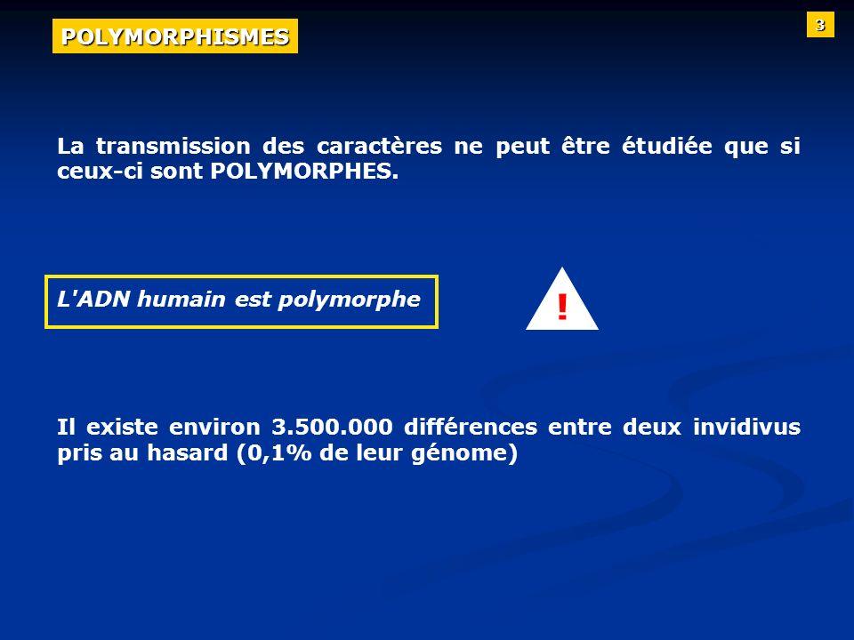 3POLYMORPHISMES. La transmission des caractères ne peut être étudiée que si ceux-ci sont POLYMORPHES.