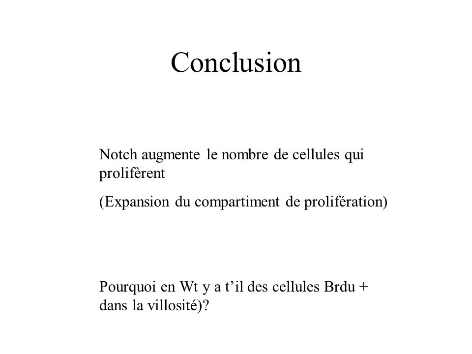 Conclusion Notch augmente le nombre de cellules qui prolifèrent