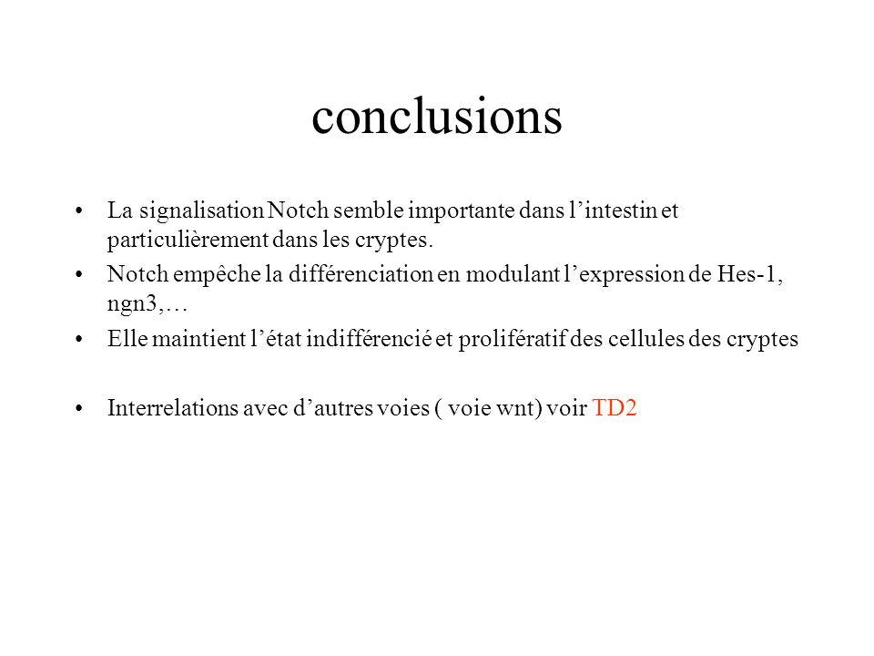 conclusions La signalisation Notch semble importante dans l'intestin et particulièrement dans les cryptes.