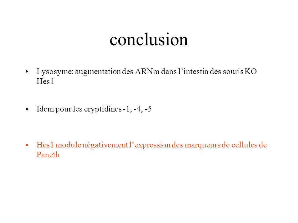 conclusion Lysosyme: augmentation des ARNm dans l'intestin des souris KO Hes1. Idem pour les cryptidines -1, -4, -5.