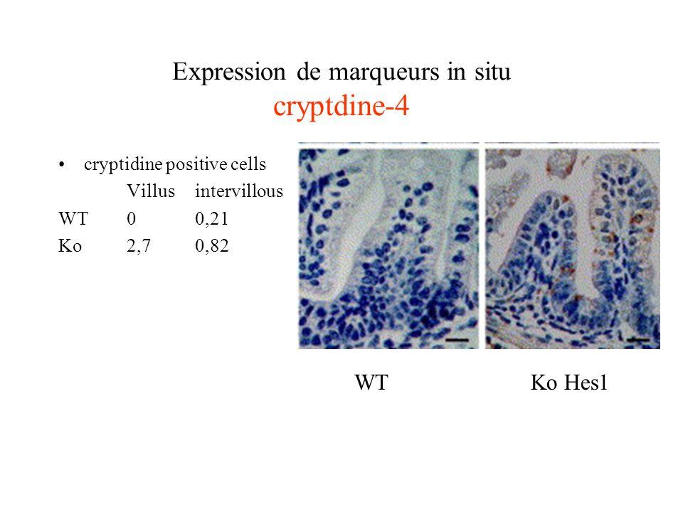 Expression de marqueurs in situ cryptdine-4
