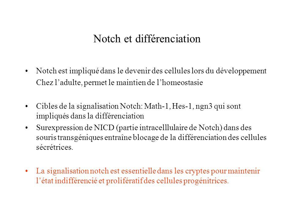 Notch et différenciation