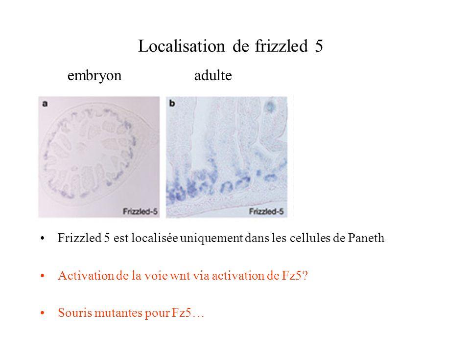 Localisation de frizzled 5