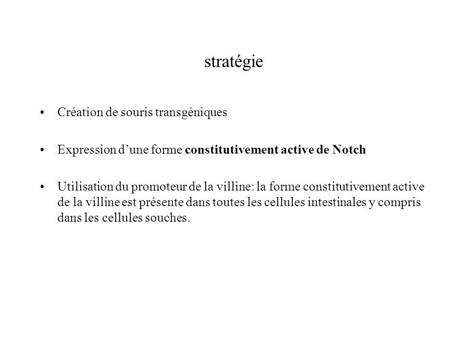 stratégie Création de souris transgéniques