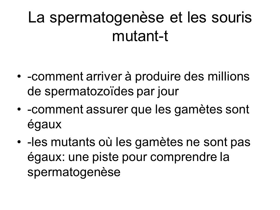 La spermatogenèse et les souris mutant-t