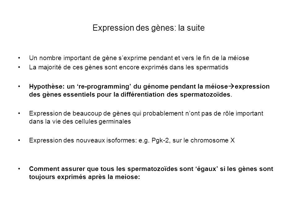 Expression des gènes: la suite