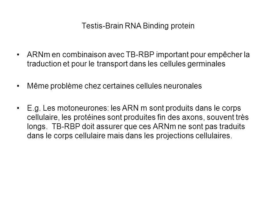 Testis-Brain RNA Binding protein