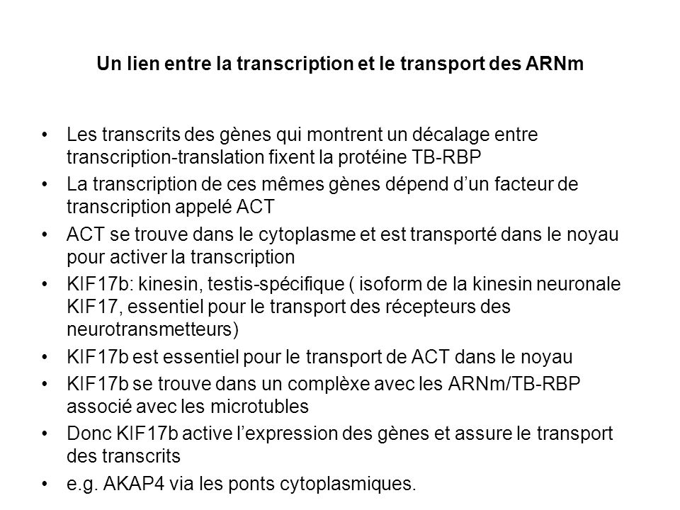 Un lien entre la transcription et le transport des ARNm