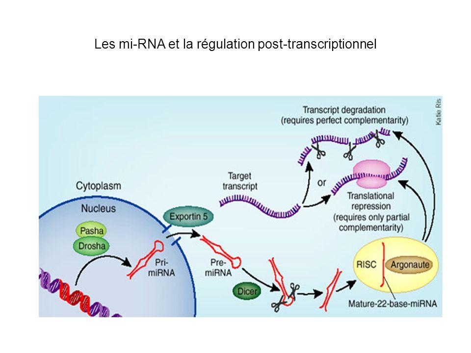 Les mi-RNA et la régulation post-transcriptionnel