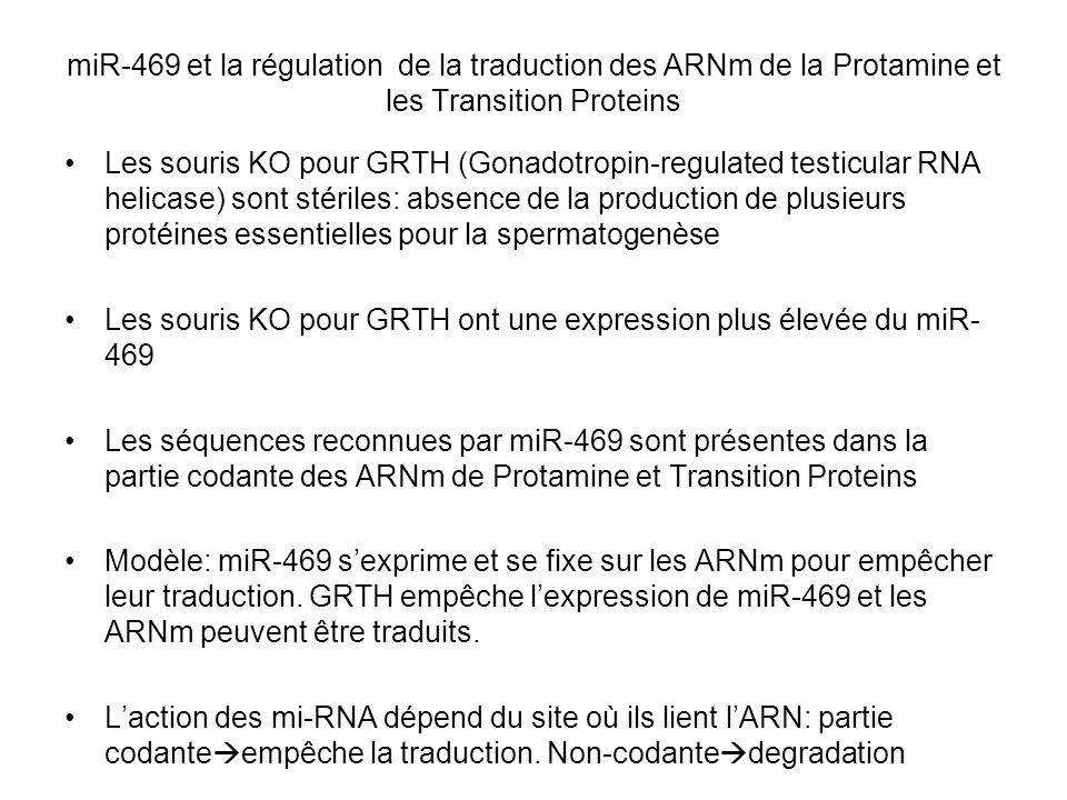 miR-469 et la régulation de la traduction des ARNm de la Protamine et les Transition Proteins