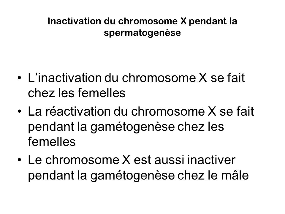 Inactivation du chromosome X pendant la spermatogenèse