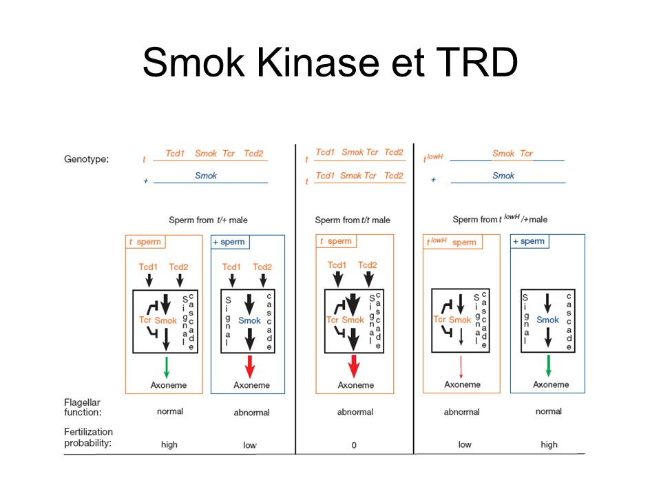 Smok Kinase et TRD