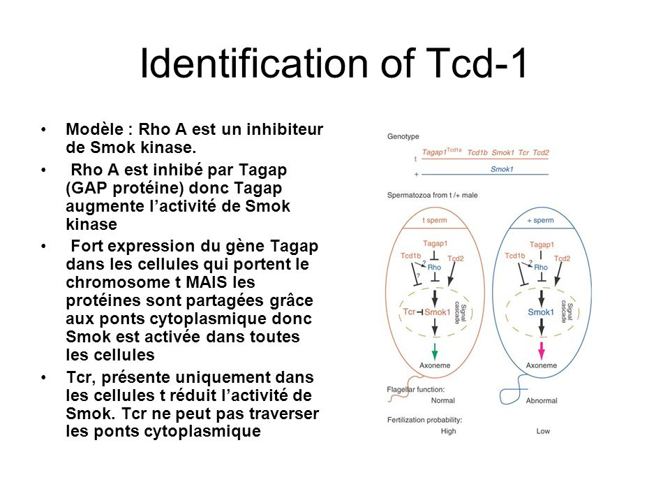 Identification of Tcd-1