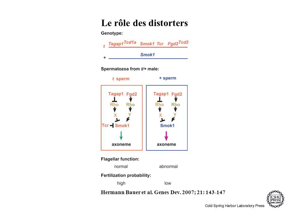Le rôle des distorters Hermann Bauer et al. Genes Dev. 2007; 21: 143-147