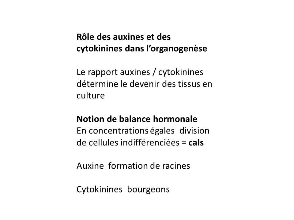 Rôle des auxines et des cytokinines dans l'organogenèse