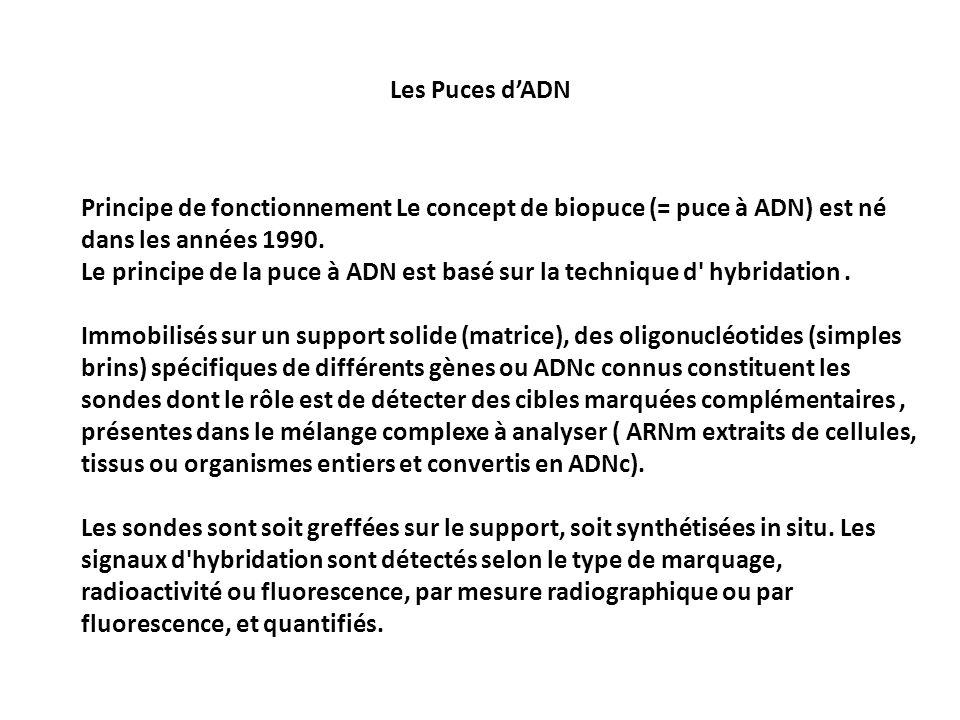 Les Puces d'ADNPrincipe de fonctionnement Le concept de biopuce (= puce à ADN) est né dans les années 1990.