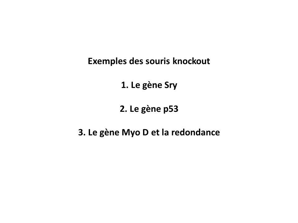 Exemples des souris knockout 1. Le gène Sry 2. Le gène p53 3