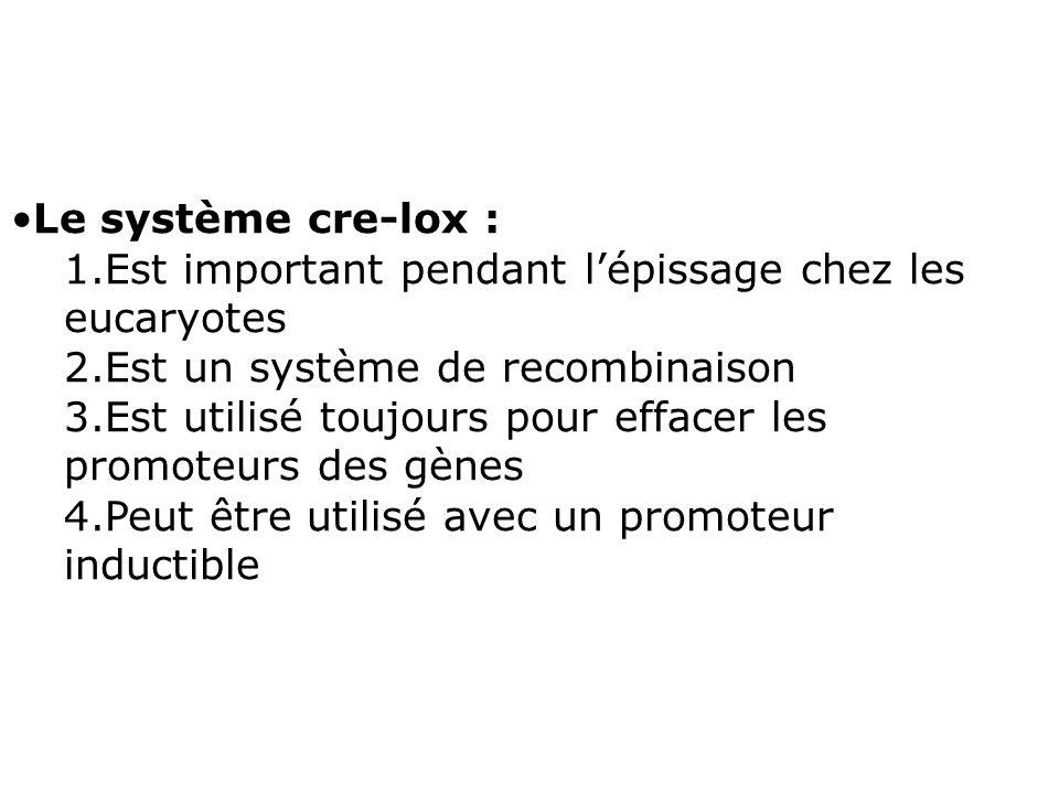 Le système cre-lox :Est important pendant l'épissage chez les eucaryotes. Est un système de recombinaison.