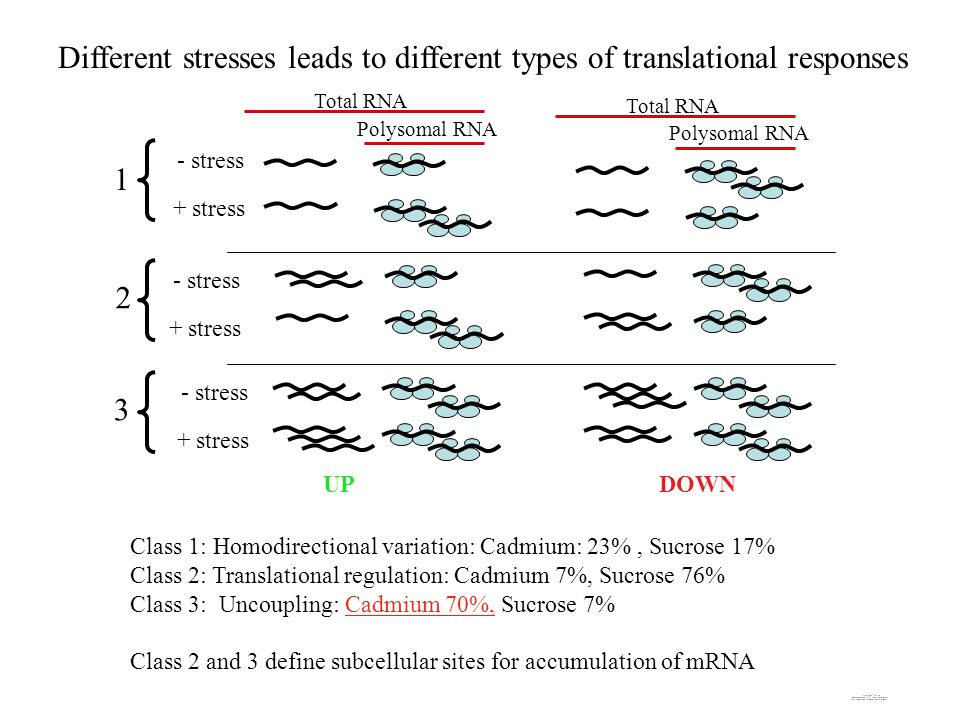Different stresses leads to different types of translational responses