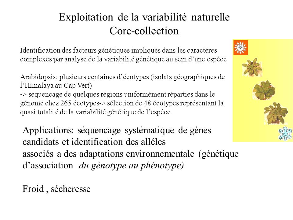 Exploitation de la variabilité naturelle Core-collection
