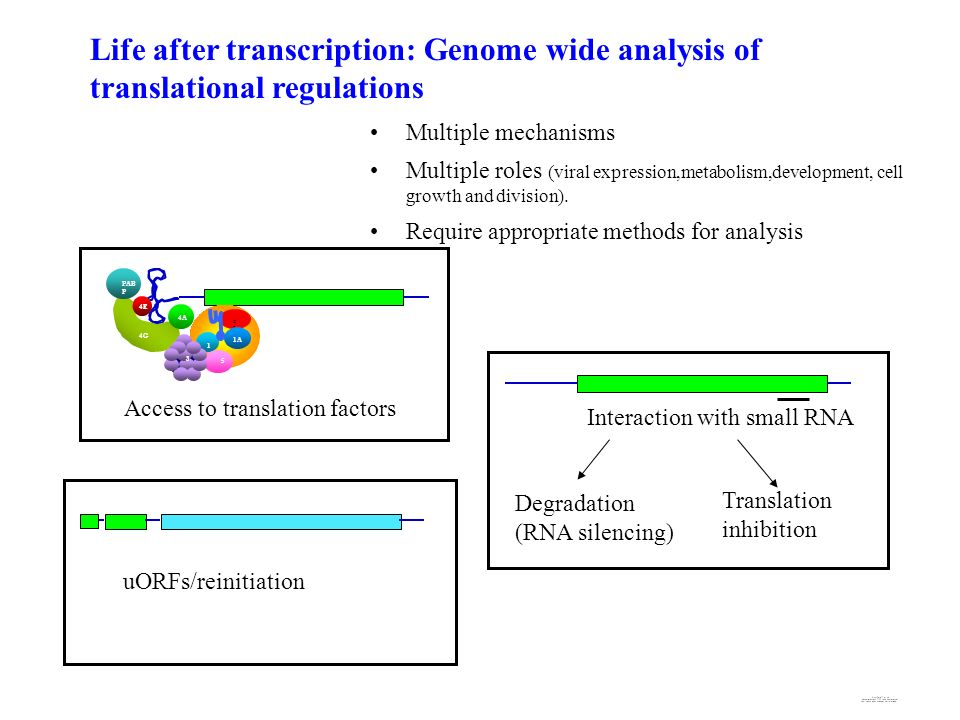 Life after transcription: Genome wide analysis of translational regulations