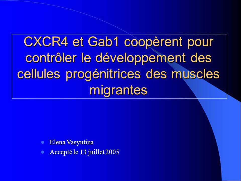 CXCR4 et Gab1 coopèrent pour contrôler le développement des cellules progénitrices des muscles migrantes