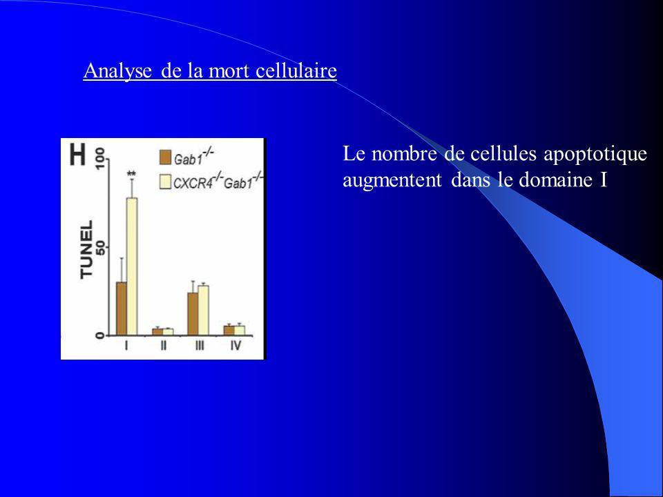 Analyse de la mort cellulaire