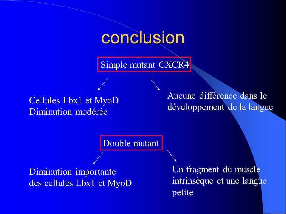 conclusion Simple mutant CXCR4 Aucune différence dans le