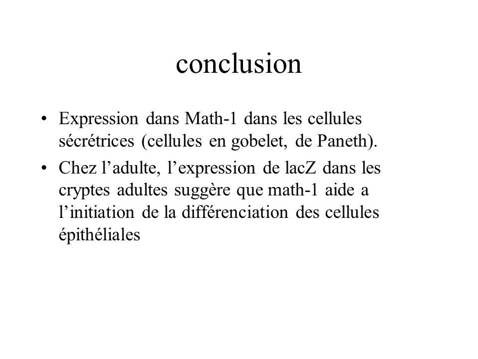 conclusion Expression dans Math-1 dans les cellules sécrétrices (cellules en gobelet, de Paneth).