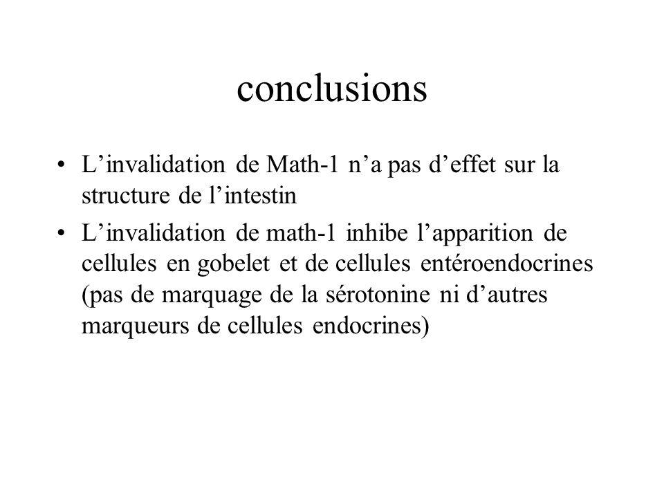 conclusions L'invalidation de Math-1 n'a pas d'effet sur la structure de l'intestin.